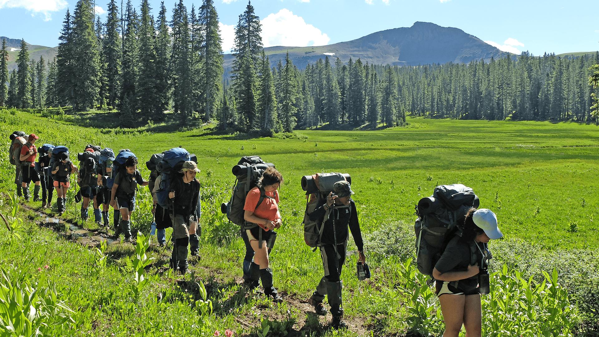 Summer is Back - Wilderness Photo